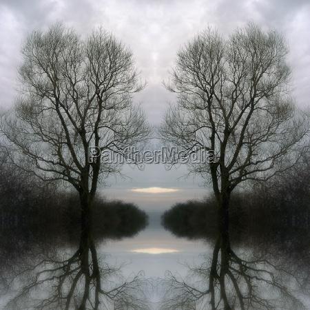 arvore arvores frio nevoeiro noite ramos