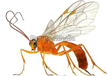 belo agradavel close up opcional inseto