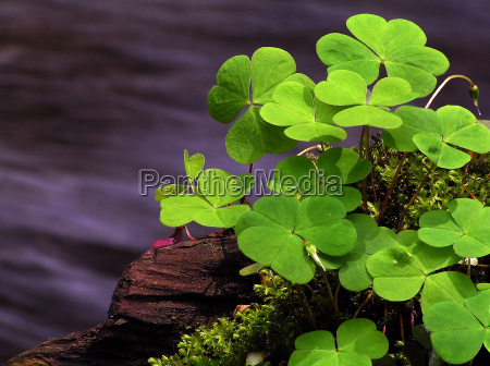 colour green stream spring clover cloverleaf