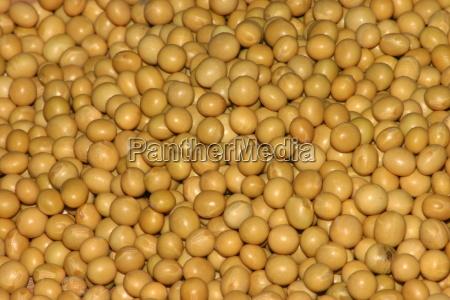 soybean, (17),(2) - 181959