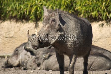 warthog, 01 - 182765