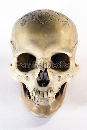 skull, iii-b - 191241