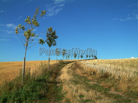 tree trees agriculture farming fields meadows