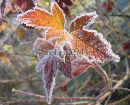 invierno frio escarcha helado diciembre hoja