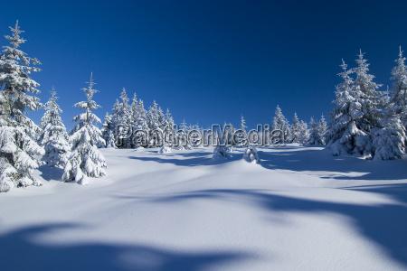 winter, wonderland - 212528