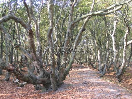 arbol arboles ramas maranya solitario camino
