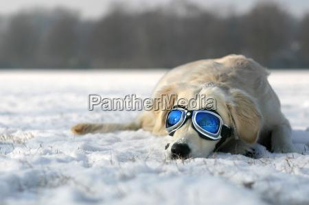 sun, in, winter - 214334
