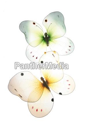 butterflies - 222625