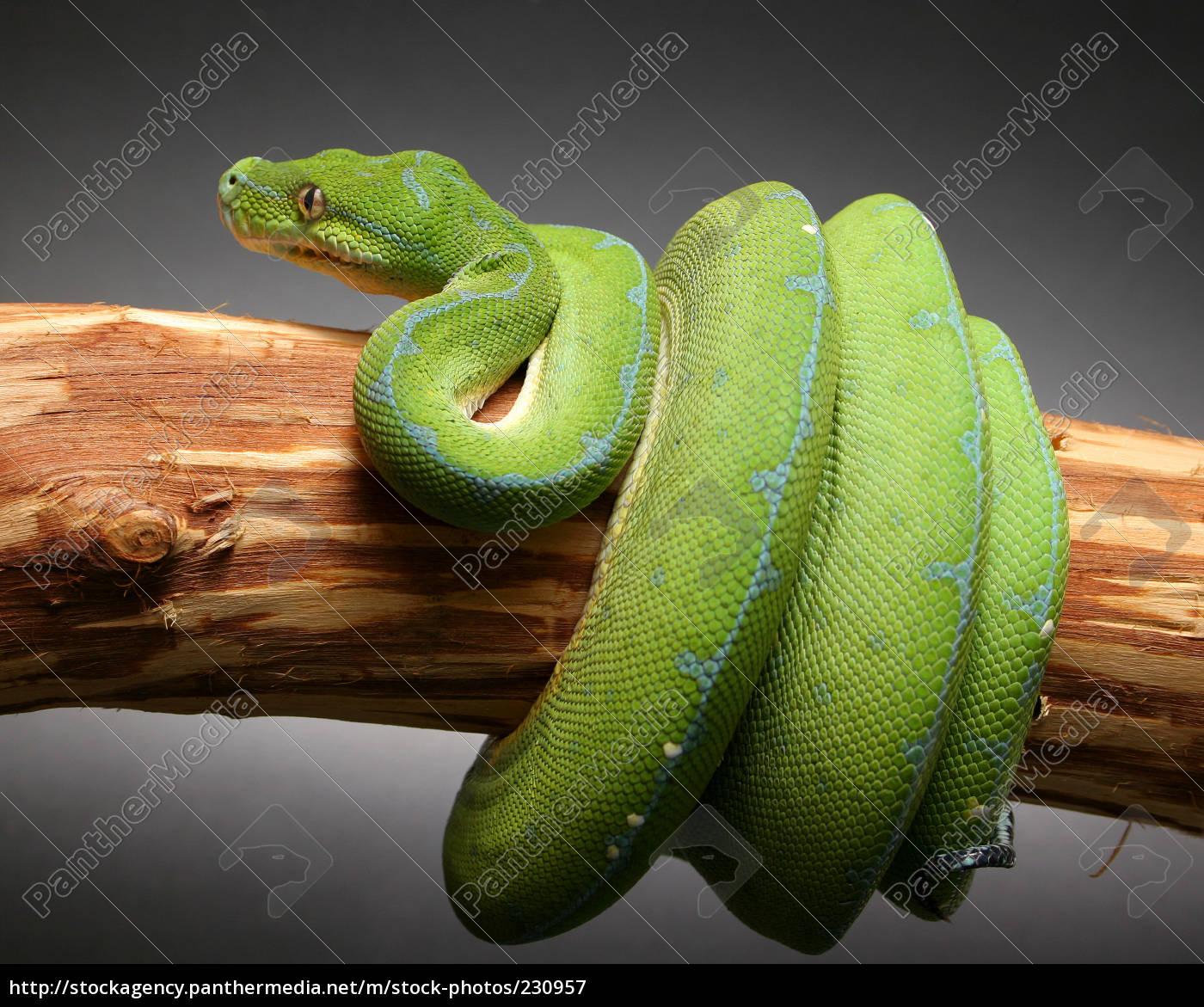 tree, python - 230957