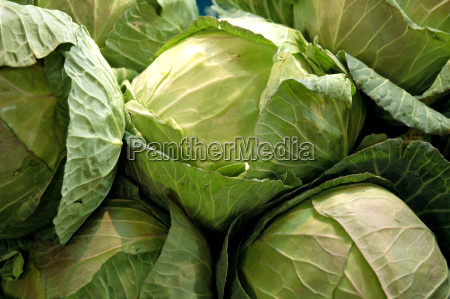 cabbage - 231755