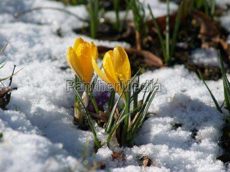 spring, awakening - 243681