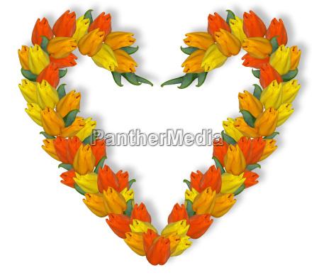 tulips, heart - 253025