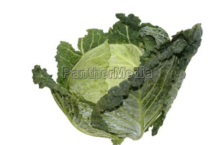 healthy - 254453