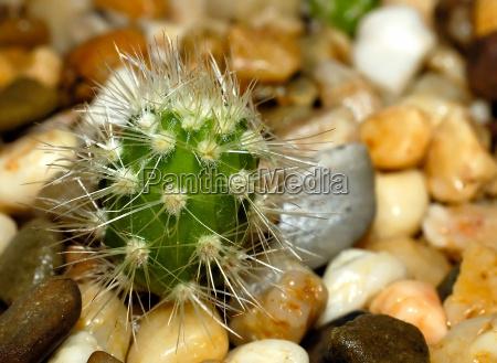 my little green cactus