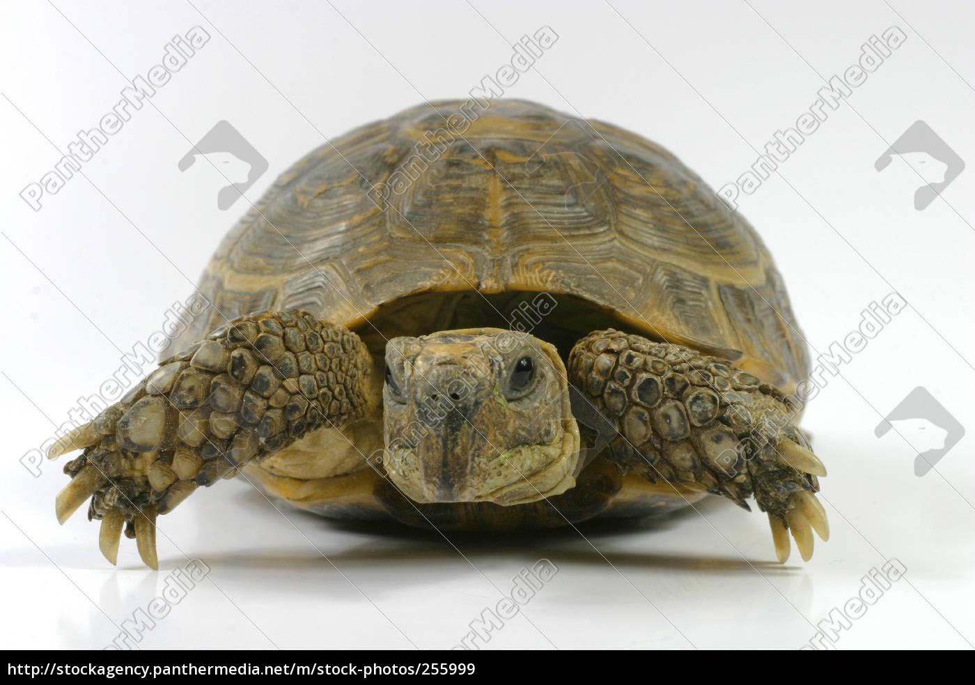 turtle - 255999
