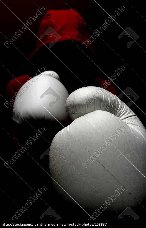 boxer - 258837