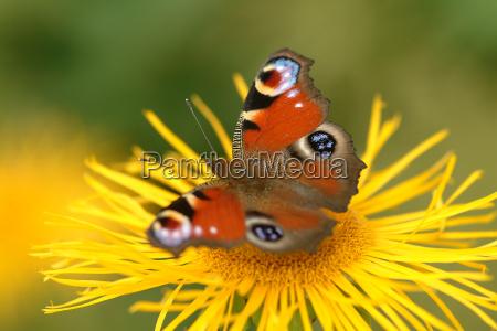butterfly on flower 8