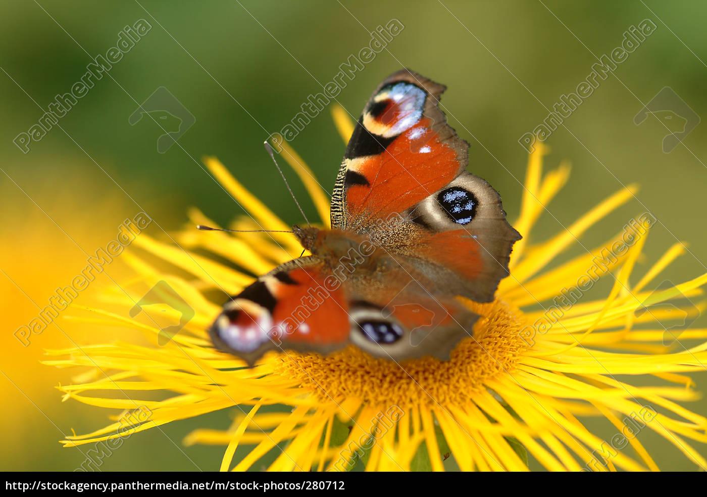 butterfly, on, flower, 8 - 280712