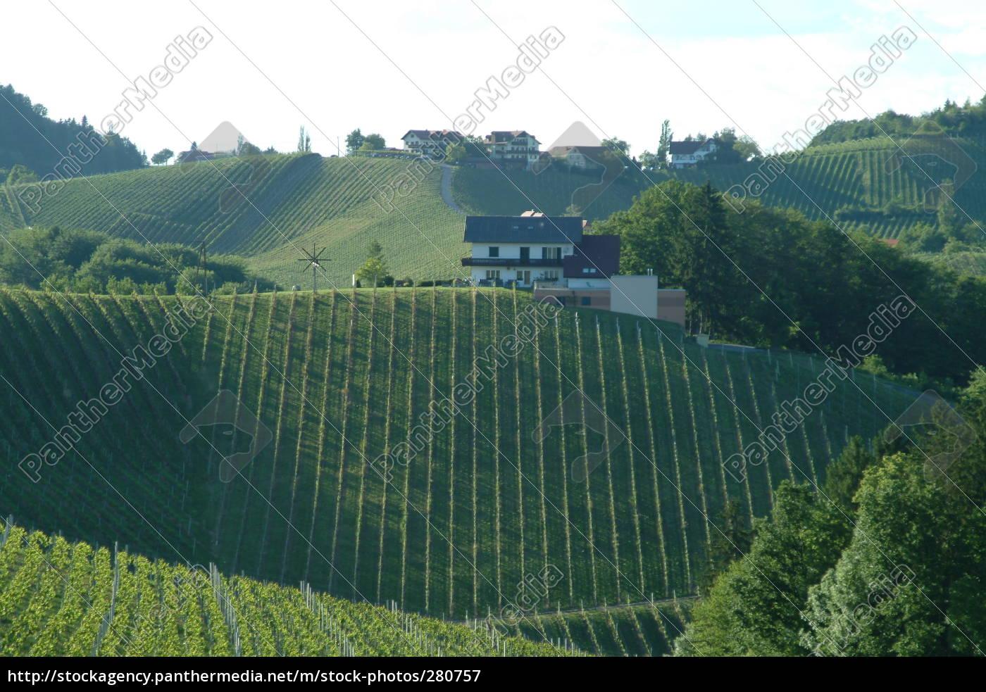 vineyard, 3 - 280757