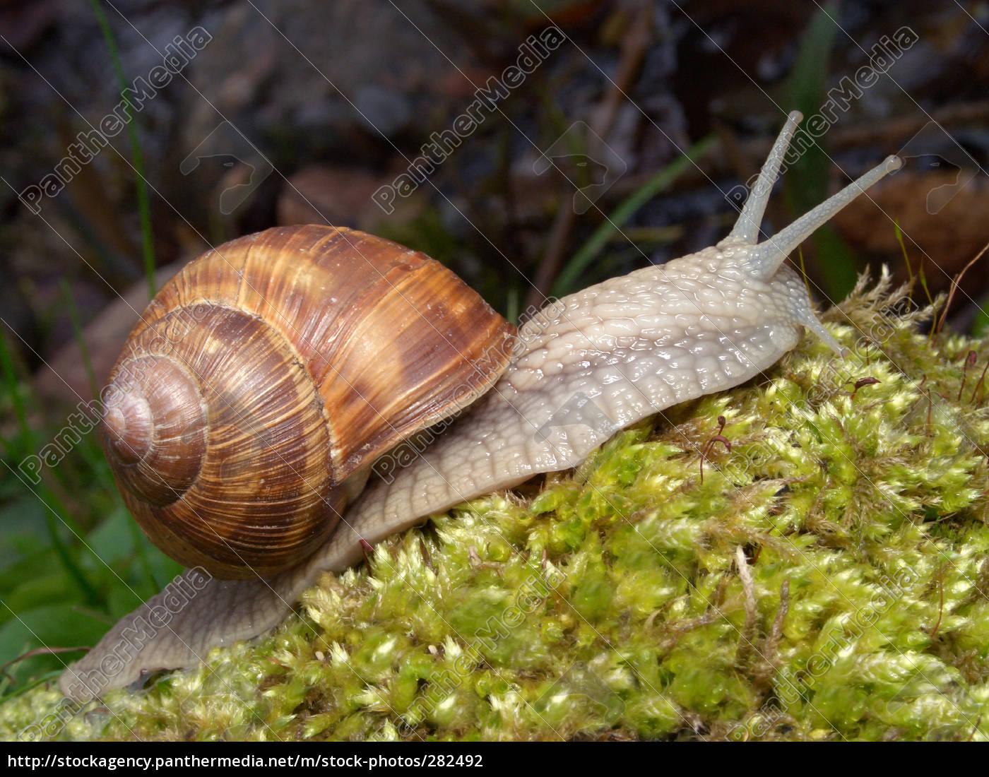 snail, 2 - 282492
