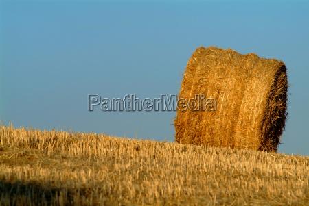 lopsided straw