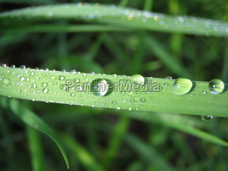 drops in the grass