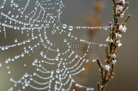 cobweb, in, the, morning, dew - 287891