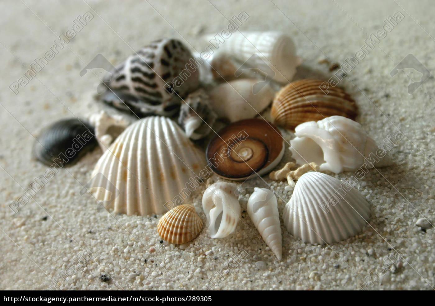 shells - 289305