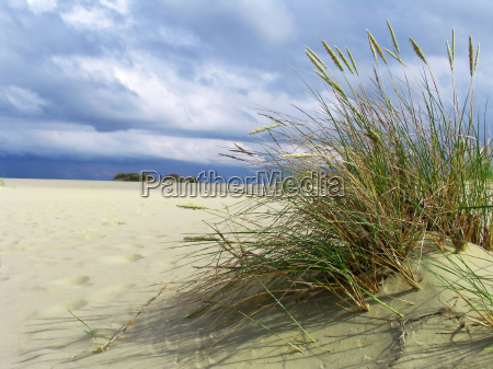 tussock in the sand