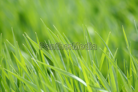 grass, in, the, sunshine - 291670