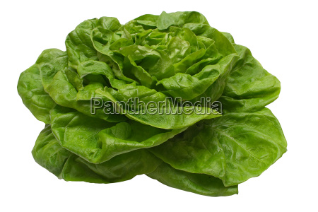 lettuce, with, clipping, path - 293525