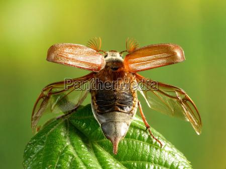 may, beetles, on, departure, 2 - 296116