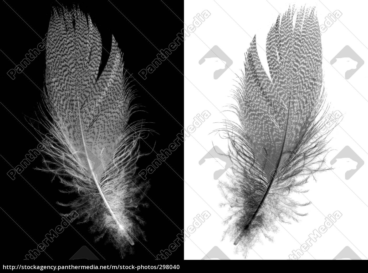 artforms, of, nature, vi - 298040