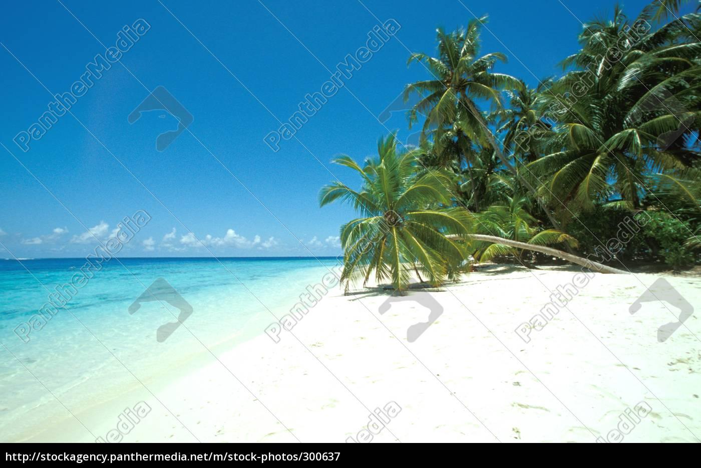 paradise - 300637