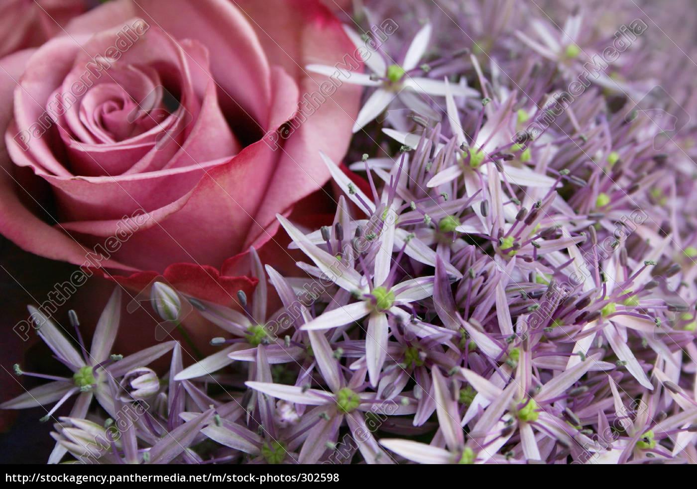 rose, and, allium - 302598