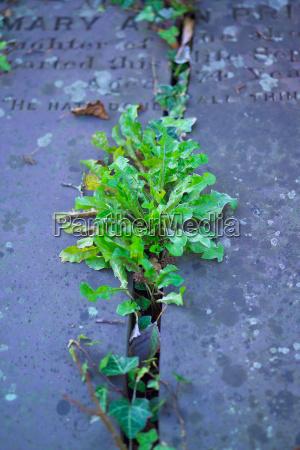 plant grave stone on