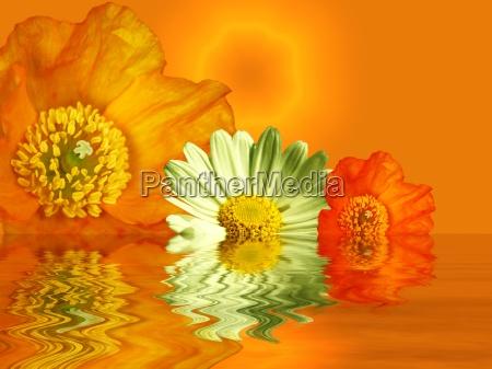 summer, colors - 308990