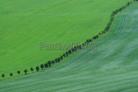 tree trees green agriculture farming spring