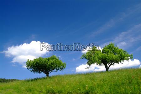 tree with sky 3