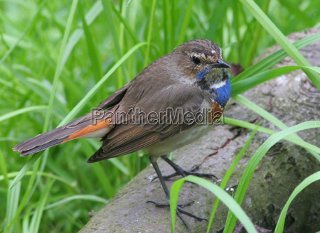 blue bird animals coloured colourful gorgeous