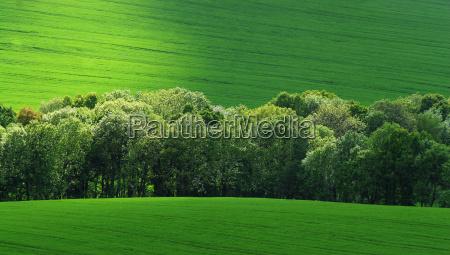 spotlight in green feelds