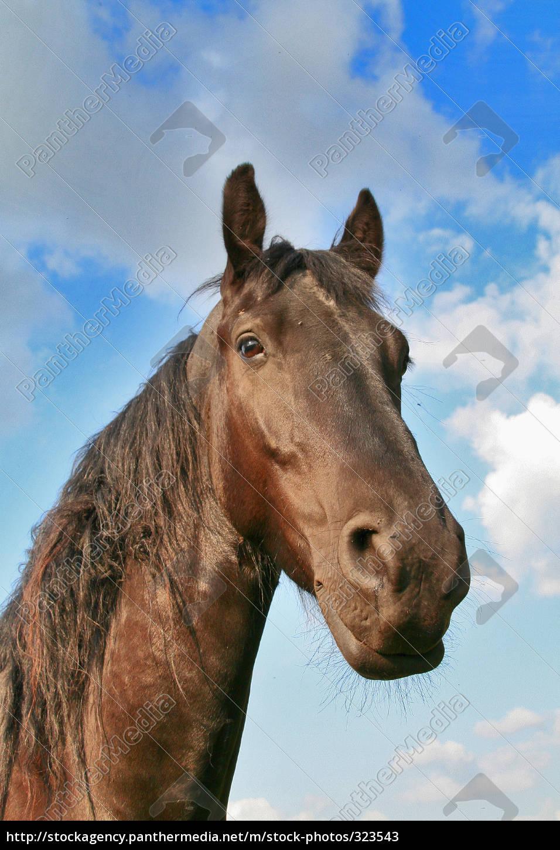 horse, heaven - 323543
