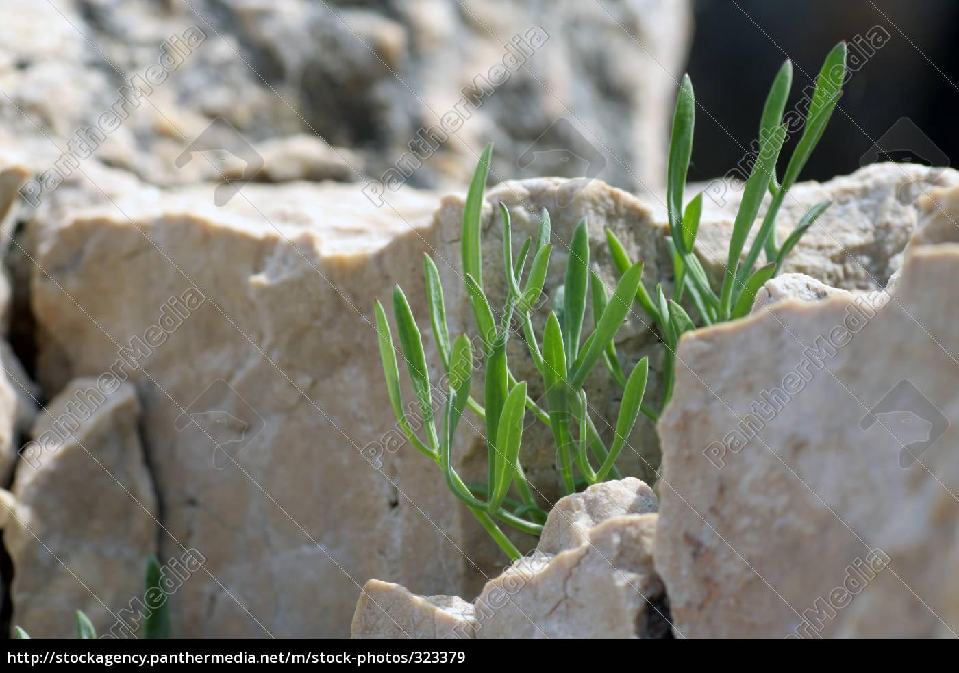 stone, plant - 323379