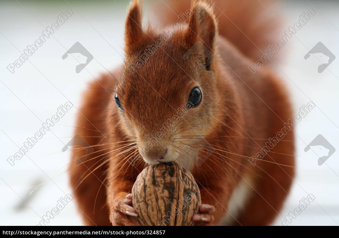 my, nut - 324857