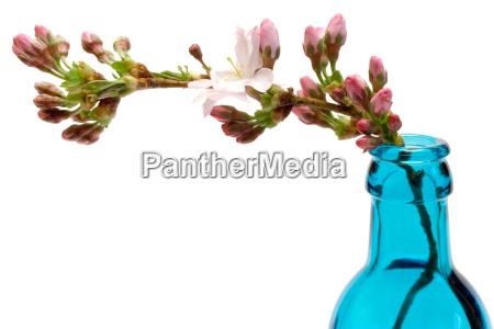 frühlingsblüte - 325373