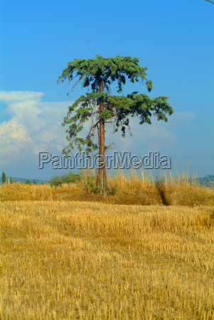 tree in field
