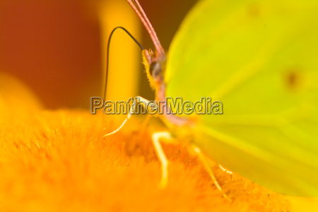 butterfly on flower 4