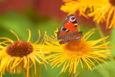 butterfly on flower 6