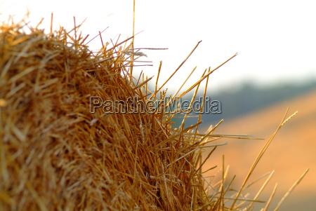 straw bales on wheat field