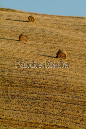 straw bales on wheat field 15